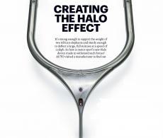 the_halo_effect.jpg