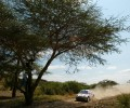 2002 WRC - Safari Rally Kenya - C. Mcrae/N. Grist, Ford Focus WRC (DPPI/F. Le Floch)
