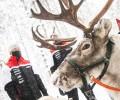 2021 WRC - Arctic Rally Finland - Kalle Rovanperä and reindeer
